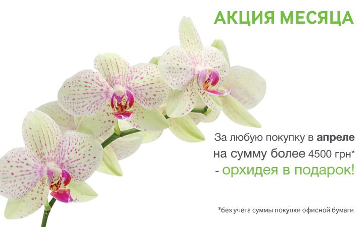 Акция апрель орхидея